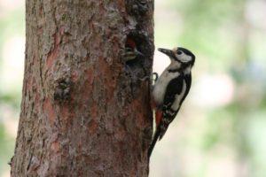 Ecobirding